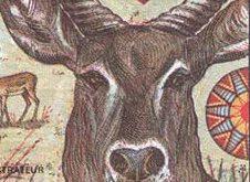 antilop